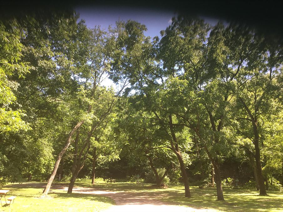 Creekside forest